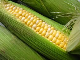 Profit From Short Term Corn Supply Tightness