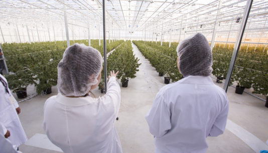 Cannabis Strategy: How To Make 40% Using Interbank Equity Options